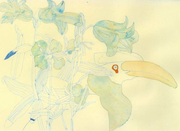 Hornbill and Flowers-jack Haslam